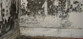 Condensation black mould growth